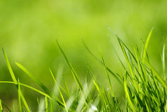 Frisches grünes Frühlingsgras Stockfoto