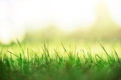 Frisches grünes Frühlingsgras mit Sonne leckt Effekt, Kopienraum Weicher Fokus Abstrakter Natur-Hintergrund fahne stockfoto