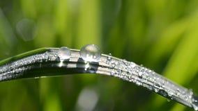 Frisches grünes Frühlingsgras mit Tautropfen stock footage