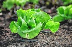 Frisches grünes Gemüse Stockfoto