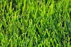 Frisches grünes Gras Stockfoto