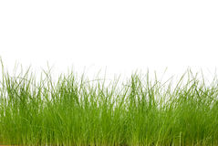 Frisches grünes Gras Stockfotografie