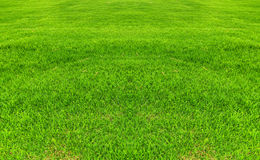 Frisches grünes Gras lizenzfreie stockfotos