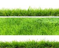Frisches grünes Gras lizenzfreies stockfoto