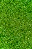 Frisches grünes Gras. Stockbilder