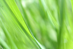 Frisches grünes Gras Stockbild