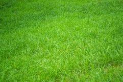 Frisches grünes Gras Stockfotos