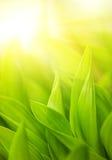 Frisches grünes Gras lizenzfreies stockbild