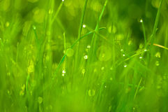 Frisches grünes Gras als Frühlings-Saison-Hintergrund Lizenzfreies Stockbild