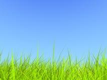 Frisches grünes Gras auf blauem sonnigem Himmelhintergrund Stockfotografie