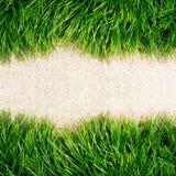 Frisches grünes Gras auf Fußboden Stockbild