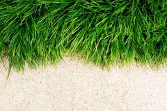 Frisches grünes Gras auf Fußboden Lizenzfreie Stockfotos
