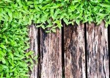 Frisches grünes Gras auf Holz Stockfotos