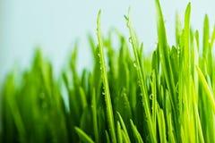 frisches grünes Gras der Natur mit befeuchtet Tropfen Stockfotos