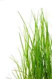 Frisches grünes Gras in der Sonne Stockbild