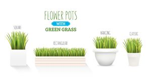 Frisches grünes Gras in einem Topf Ein Satz mit einigen Formen von Töpfen Element des Hauptdekors Das Symbol des Wachstums und de Stockfotos