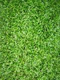 Frisches grünes Gras für Hintergrund und Beschaffenheit Stockbild