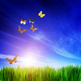 Frisches grünes Gras, fliegende Schmetterlinge und blauer Himmel Stockfotos