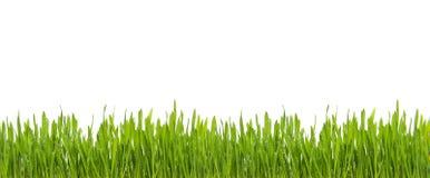 Frisches grünes Gras mit Regenwasser lokalisiert auf weißem Hintergrund Stockbilder