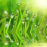 Frisches grünes Gras mit Tautropfennahaufnahme Stockfotos