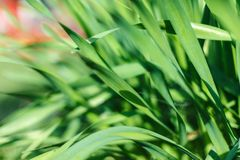 Frisches grünes Gras mit Wassertröpfchen im Sonnenschein Lizenzfreies Stockfoto
