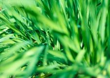 Frisches grünes Gras mit Wassertröpfchen im Sonnenschein lizenzfreie stockbilder