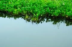 Frisches grünes Gras am Seeufer ruhiges Wasser, Reflexion stockbild