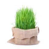 Frisches grünes Weizengras in der Sacktasche Lizenzfreies Stockbild