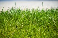 Frisches Gras Lizenzfreies Stockbild