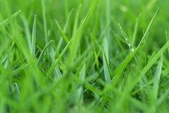 Frisches Gras Lizenzfreie Stockbilder