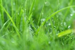Frisches Gras Lizenzfreies Stockfoto