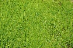 Frisches Gras Stockbild