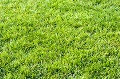 Frisches Gras Stockfotografie