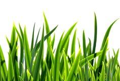 Frisches Gras stockfoto