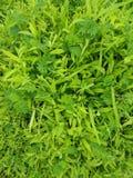 Frisches Gras für den Morgenvogel Lizenzfreie Stockfotos