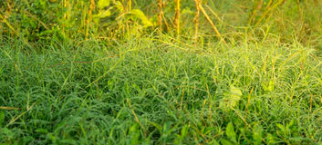 Frisches Gras mit Tautropfen schließen oben unter Morgensonnenschein lizenzfreie stockbilder