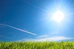 Frisches Gras und blauer sonniger Himmel Stockfotografie