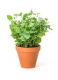 Frisches grünes Blatt von Melisse über Weiß Lizenzfreies Stockfoto