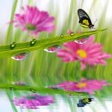 Frisches grünes Gras mit Tautropfen und Schmetterlingsnahaufnahme Stockfoto
