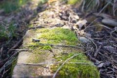 Frisches grünes Moos auf einem Baumstamm Lizenzfreies Stockfoto