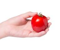 Frisches Isolat der Tomaten an Hand auf Weiß Lizenzfreies Stockfoto