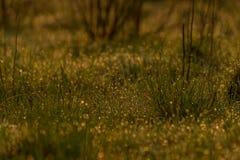 Frisches junges Gras Stockbild