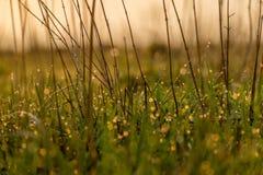 Frisches junges Gras Lizenzfreies Stockfoto
