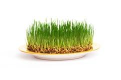 Frisches Korn auf einer Platte Stockbild