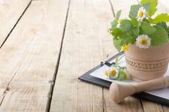 Frisches Kraut, medizinisches Klemmbrett auf Holztisch Abbildung auf weißem Hintergrund Lizenzfreies Stockfoto
