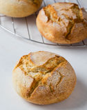 Frisches krustiges Brotbrötchen Stockbild