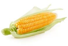 Frisches Maisgemüse mit grünen Blättern lizenzfreie stockbilder
