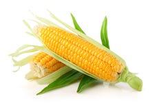 Frisches Maisgemüse mit grünen Blättern stockbilder