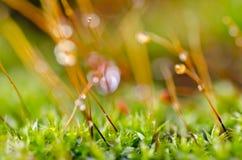Frisches Moos in der grünen Natur Stockfotografie