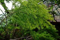 Frisches natürliches grünes Blatt Lizenzfreie Stockbilder